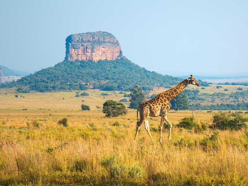 Entabeni Safari Wildlife Reserve, South Africa