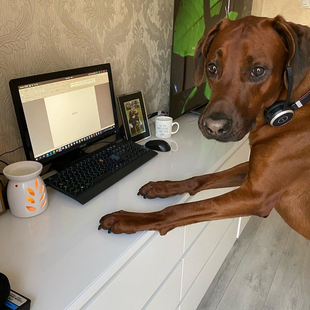 Puppy working from home