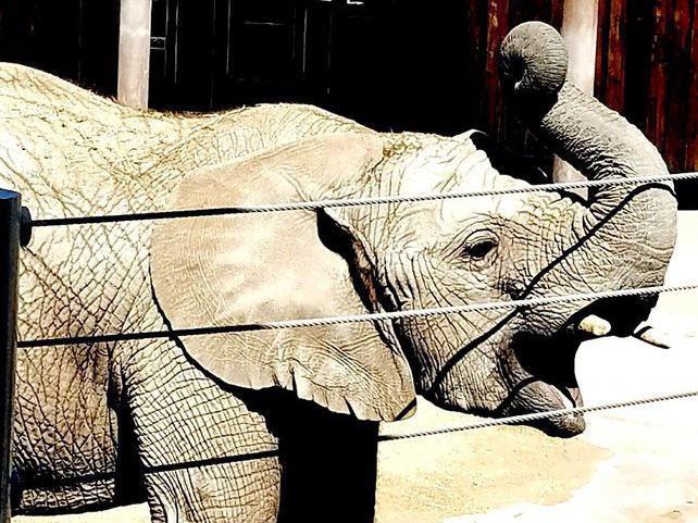 Elephant at Hogle Zoo