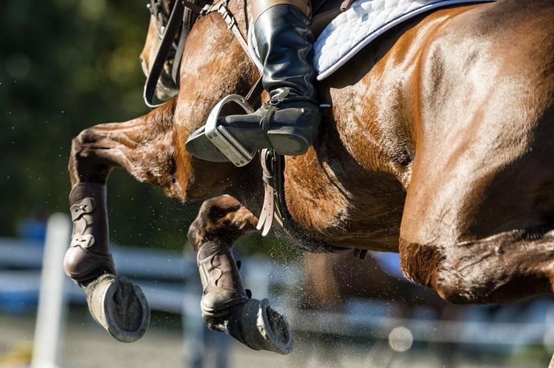 horse knees