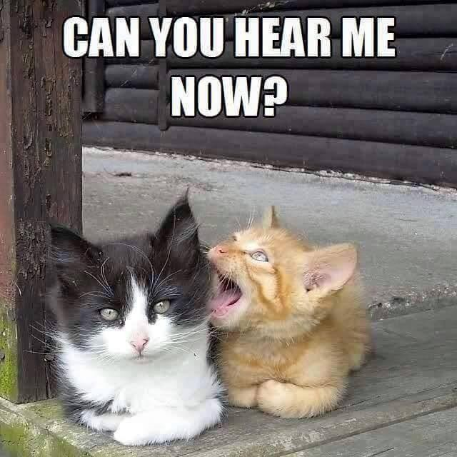 Cat talking another cat's ear