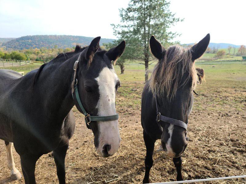 Wildfire Ranch Spiritual Retreat