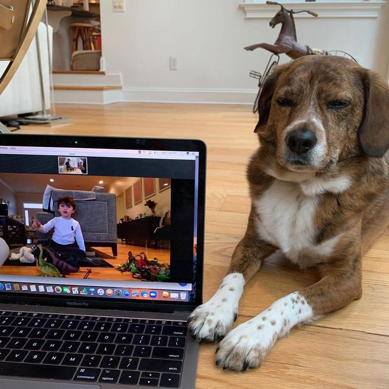Virtual playdate and beagle