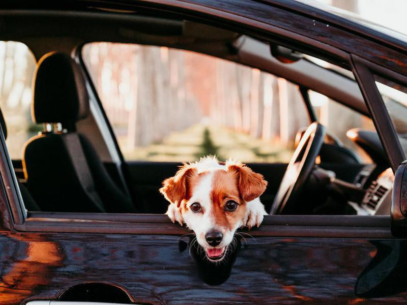 It's OK to Leave Your Dog in a Car on a Hot Day If Your Windows Are Down