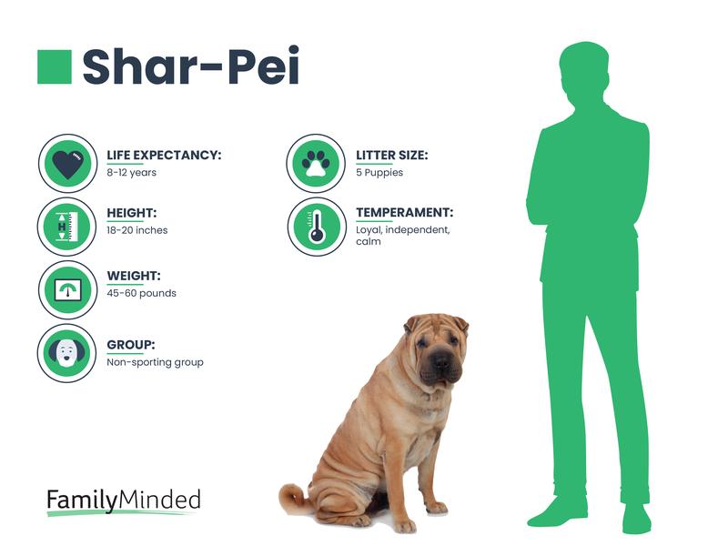 Shar Pei Breed