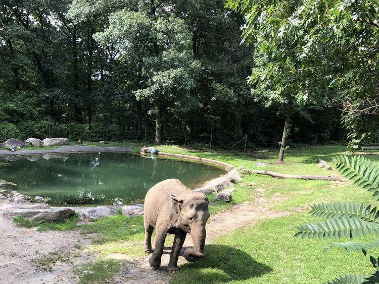 Elephant at Bronx Zoo