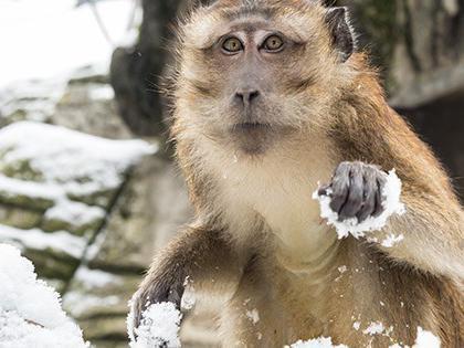 Monkey at the Basel Zoo