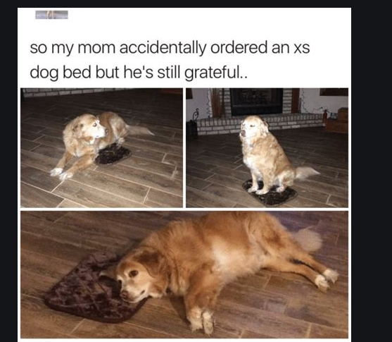 Dog grateful for extra small dog bed
