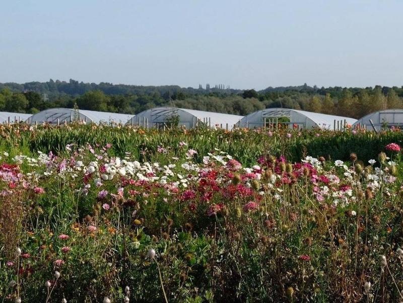 Historic English mansion eco resort organic garden