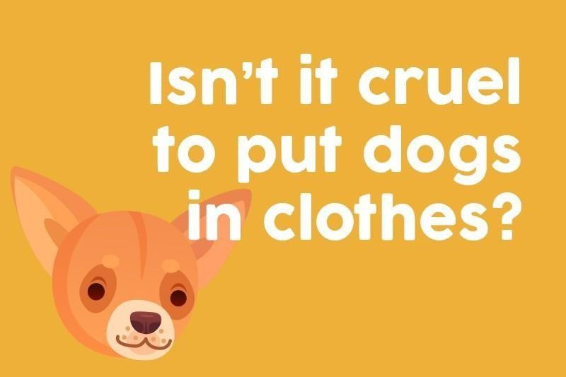 Isn't it cruel to put dogs in clothes?