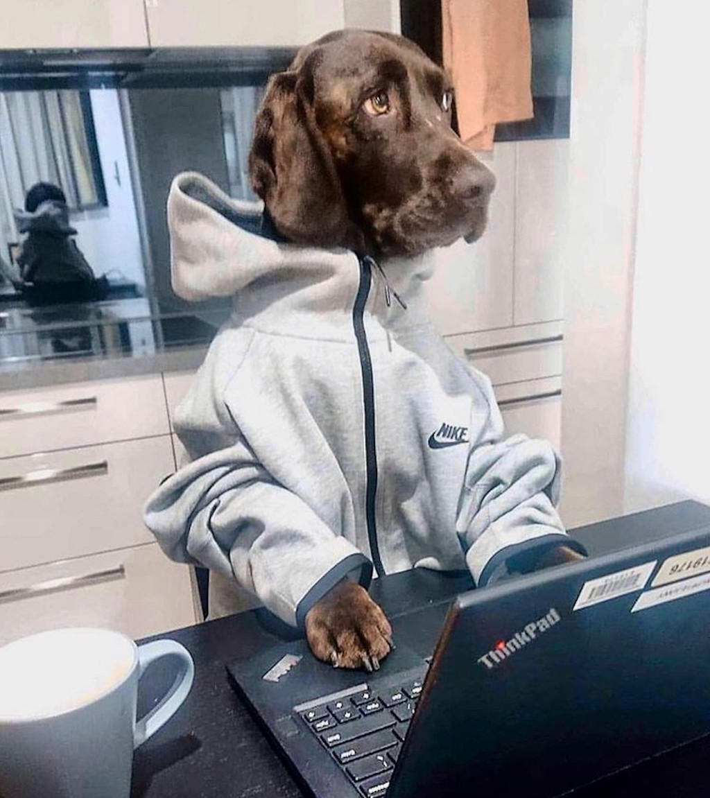 Dog working from home in a sweatshirt