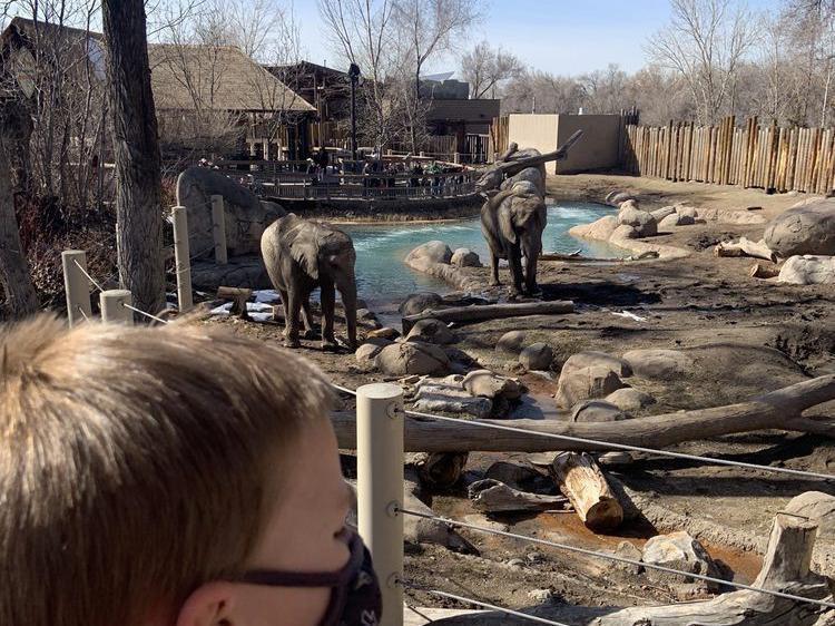 Elephants at Hogle Zoo