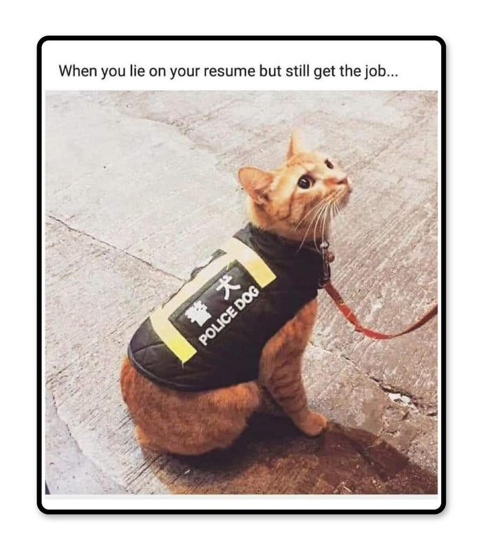 Resume story