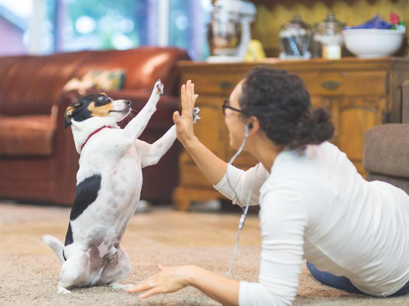 You Can't Teach an Old Dog New Tricks — Debunked