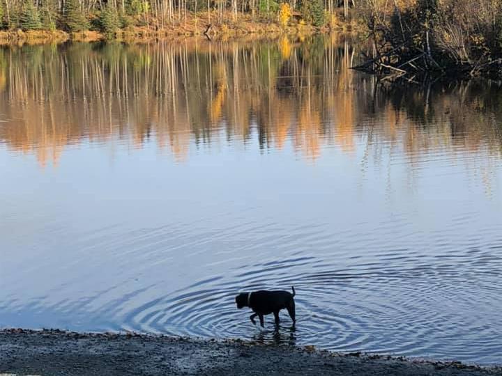 University Lake Dog Park