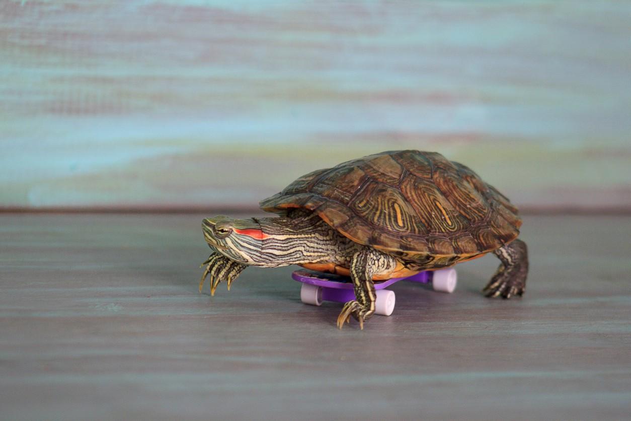 Turtle Riding a Skateboard