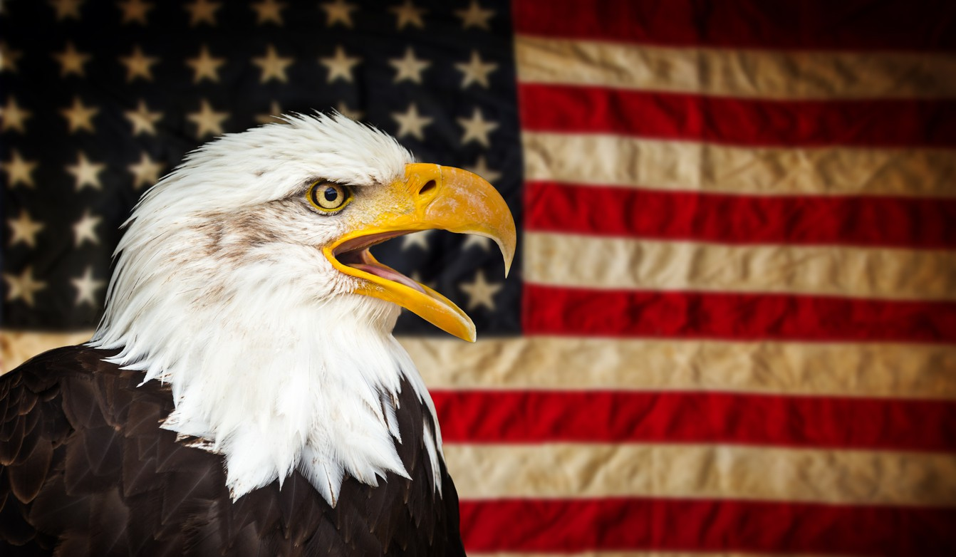 American Bald Eagle with American flag
