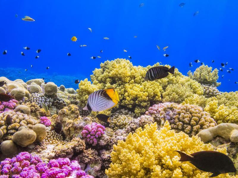 Coral Garden Reef on Red Sea