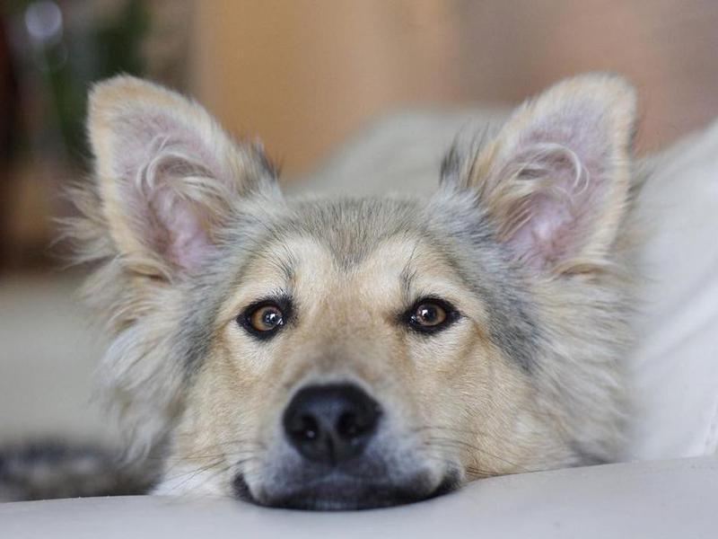 close up dog portrait