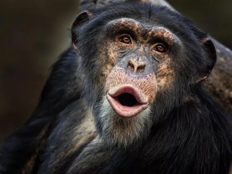 animals keep humans alive