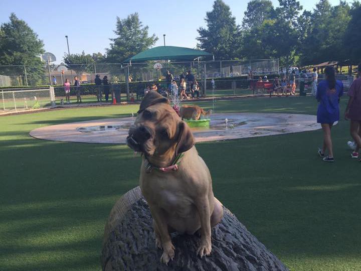 Newton Dream Dog Park
