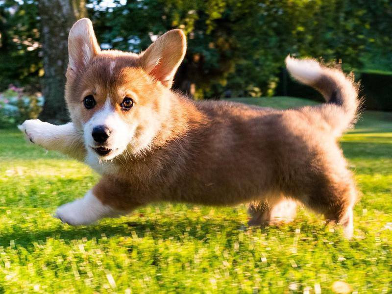 Cheapest And Cutest Dog Breeds In The World Work Money