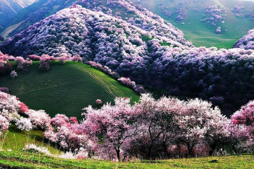 Apricot Valley