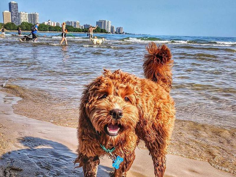 Cute dog playing at Montrose Dog Beach