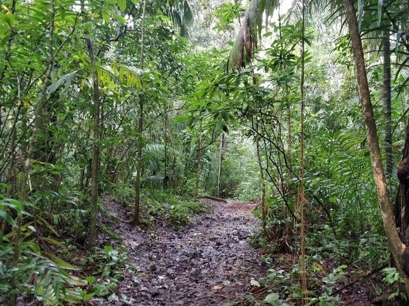TransPanama Trail