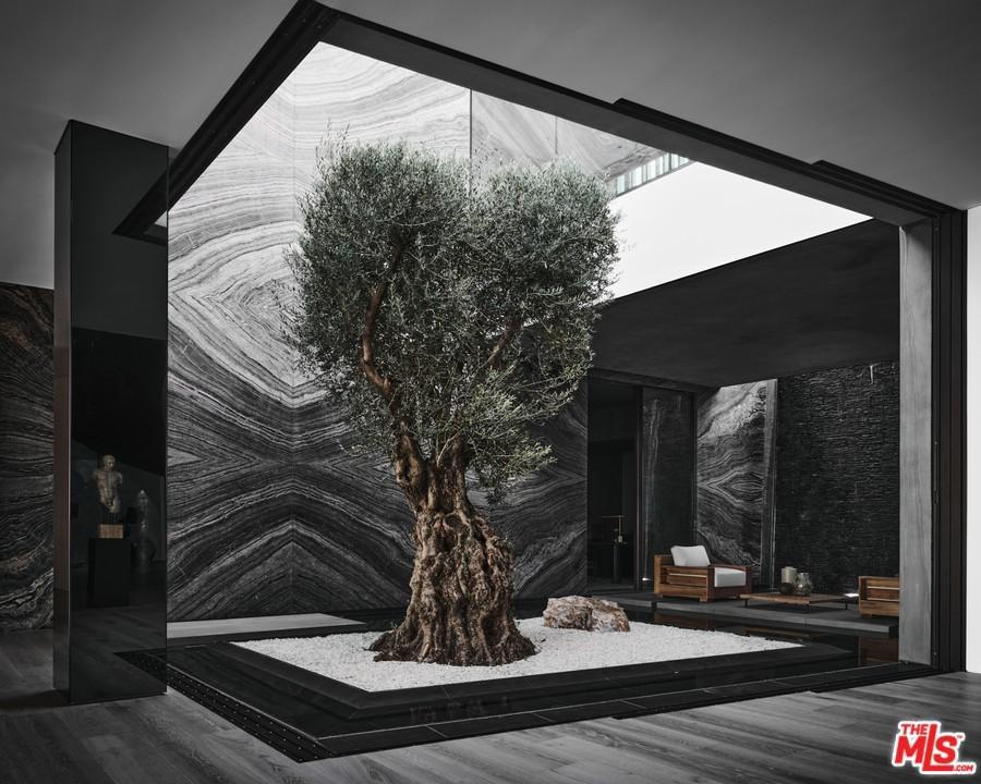 Interior olive tree