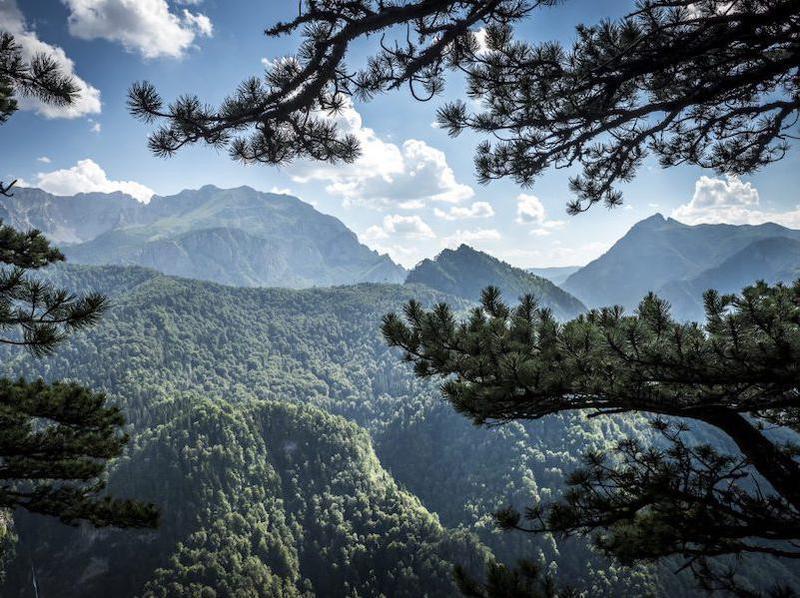 perucica rainforest