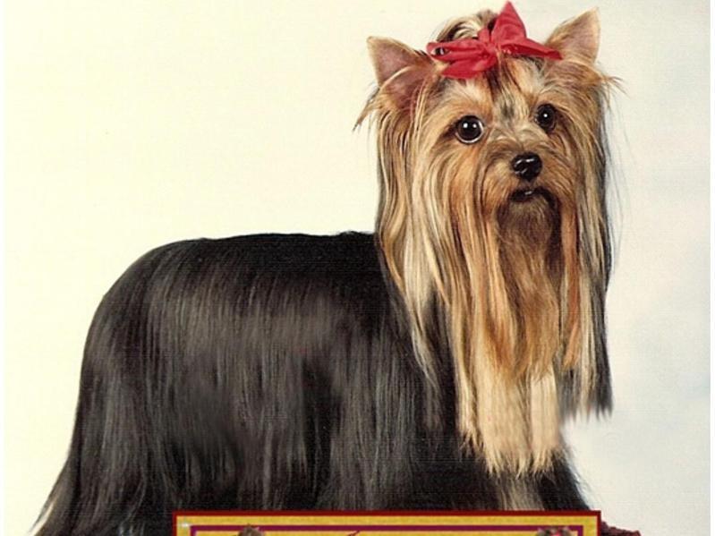 Even the First Biewer Terrier's Parents Had Unique Names
