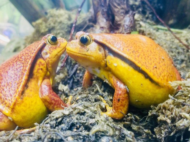 Frogs at Steinhart Aquarium