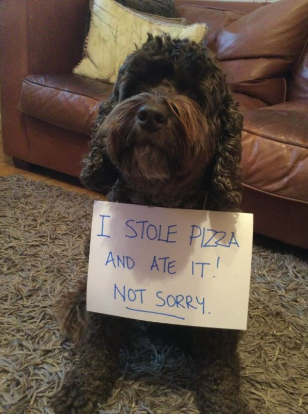 Cute dog stole pizza