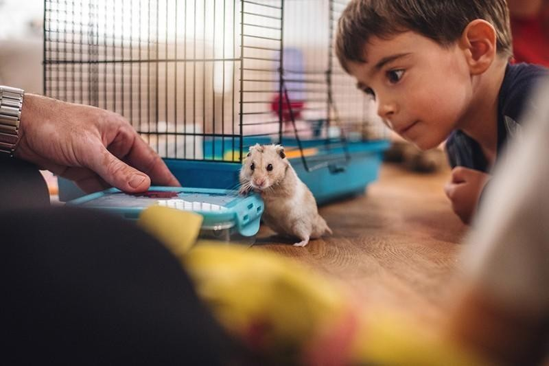 family and pet hamster