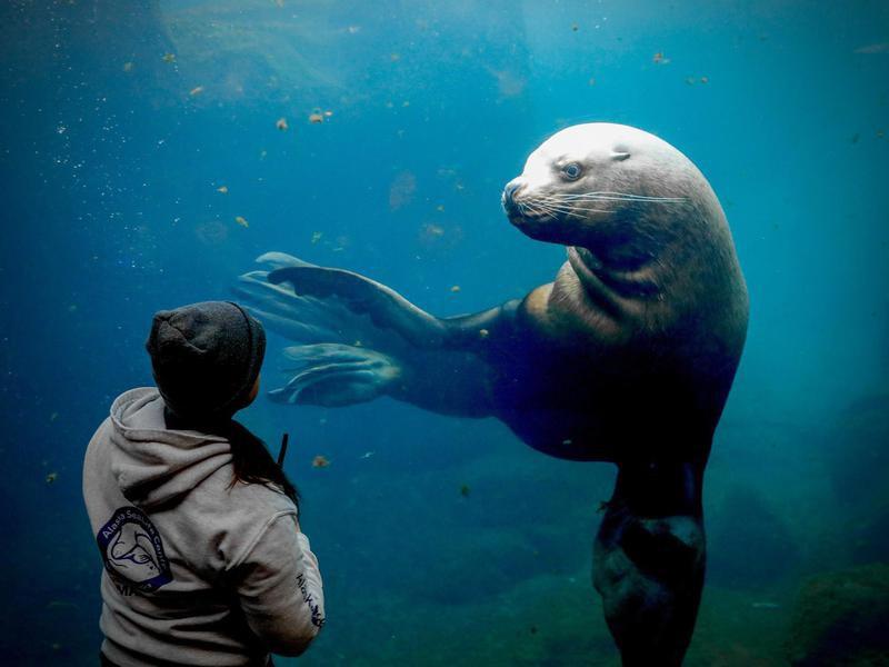 35 Best Aquariums in America, Ranked