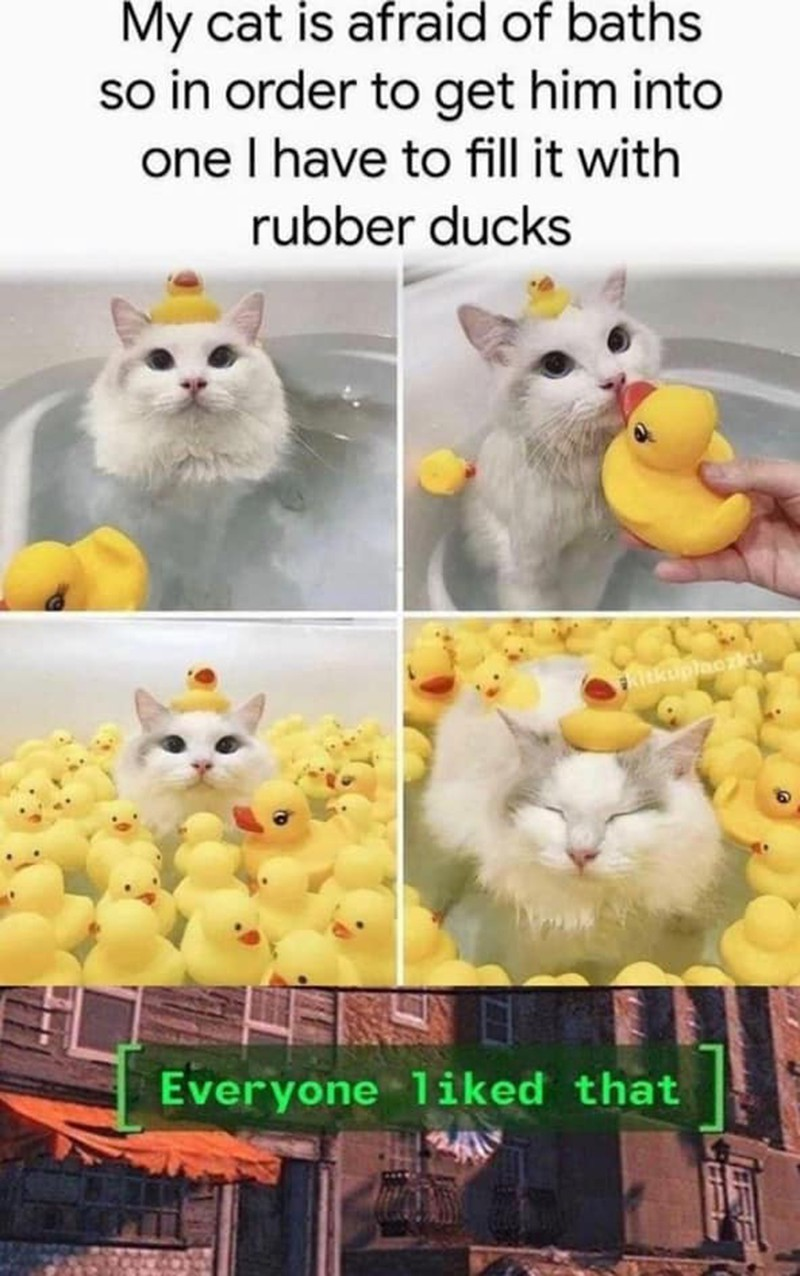 cat in bath with rubber ducks