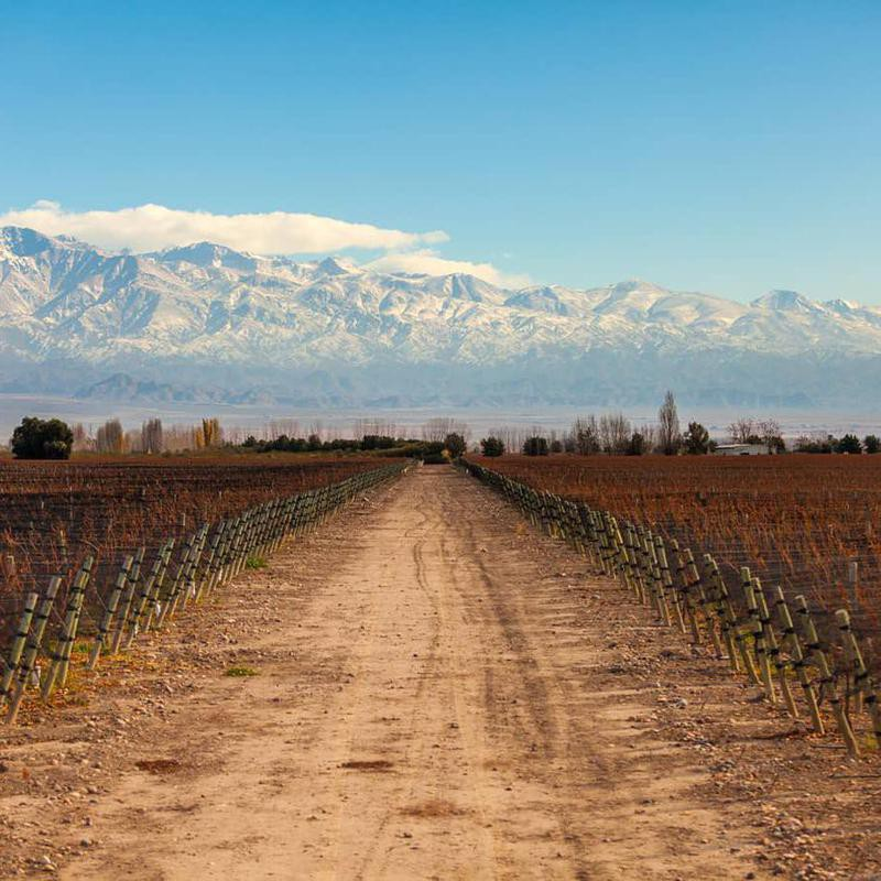 Argentinian Wine Route