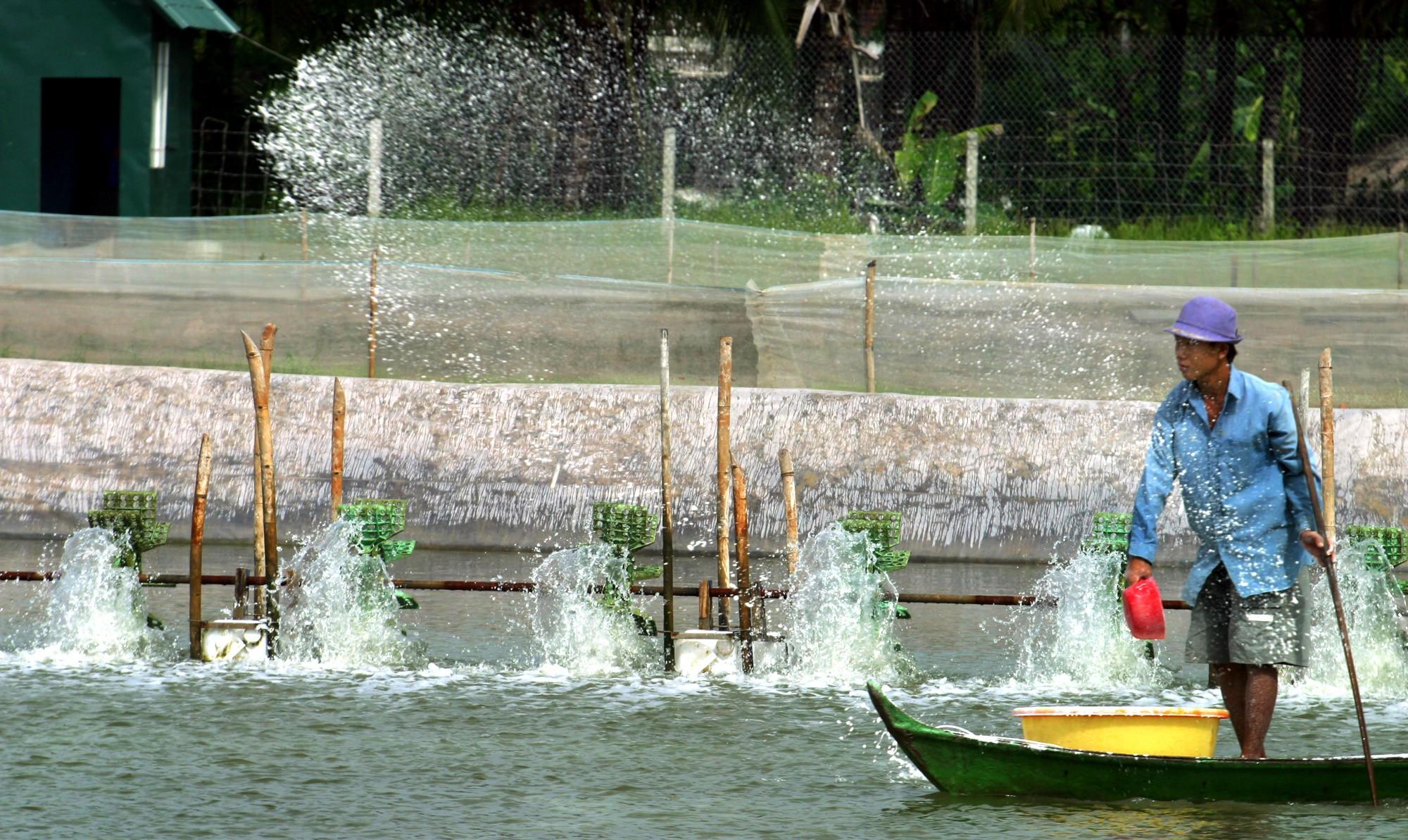 Shrimp pond in Vietnam