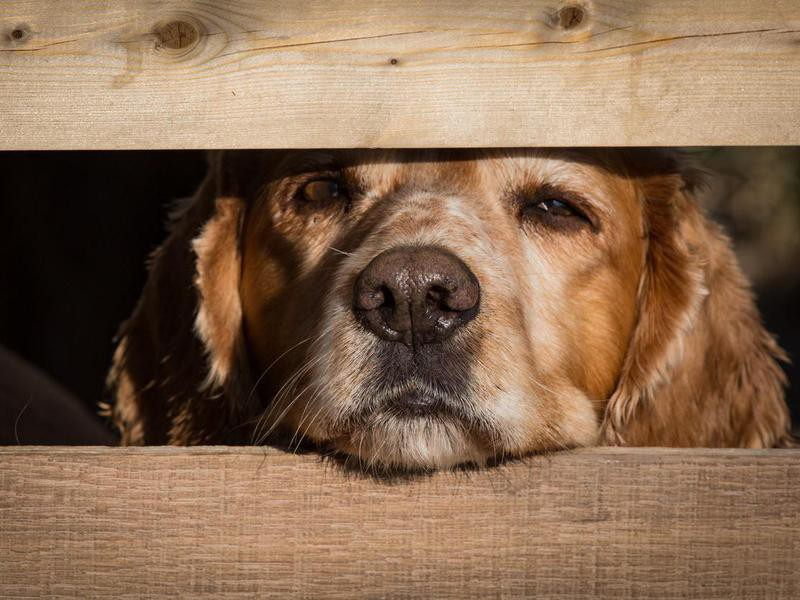 A Cold, Wet Nose Means a Healthy Dog — Debunked