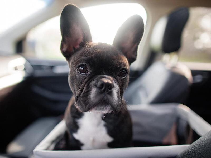 It's OK to Leave Your Dog in a Car on a Hot Day If Your Windows Are Down — Debunked