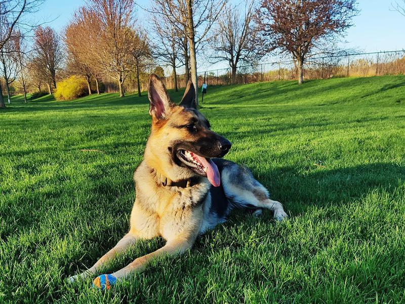 Duke's Dog Run at Freedom Park