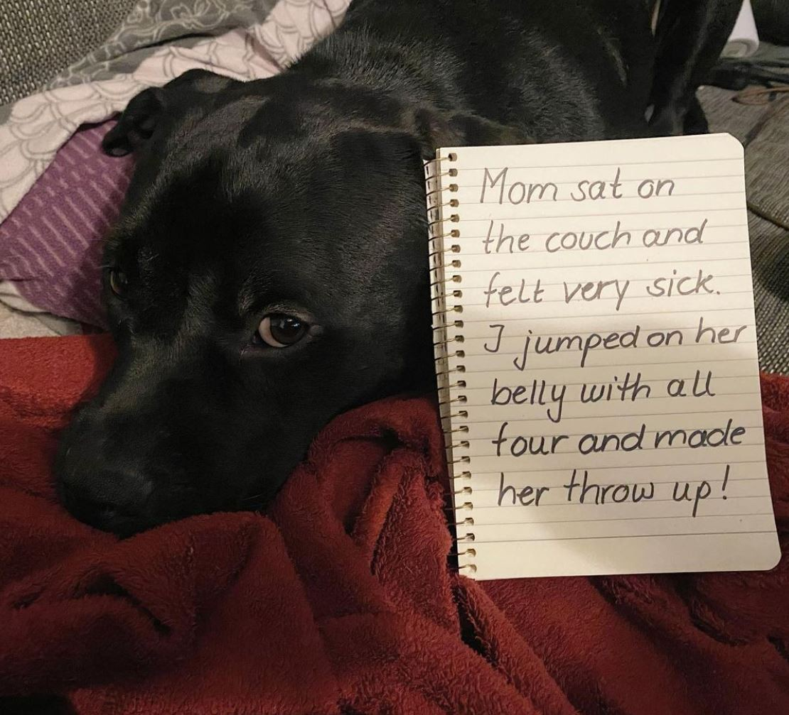 Silly dog jumped on mom