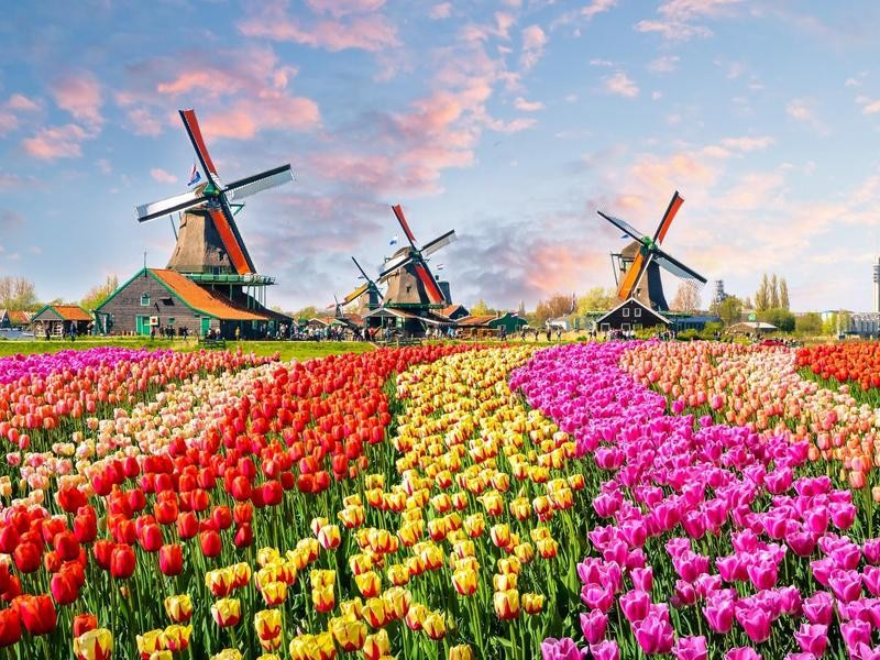 Dutch windmills and houses