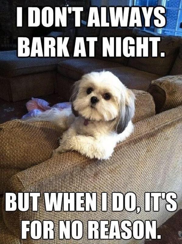Bark at night dog meme