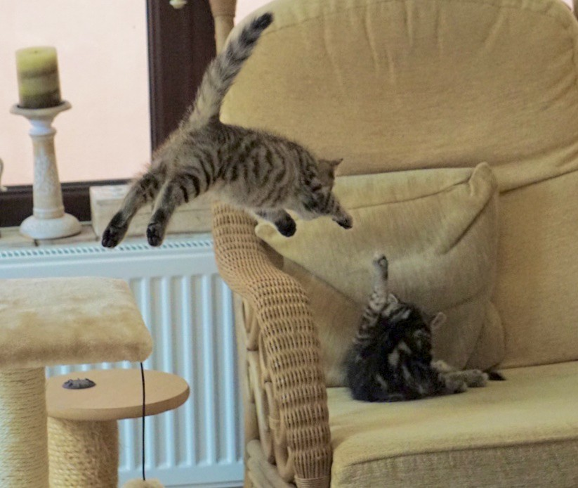 cat in for a shock