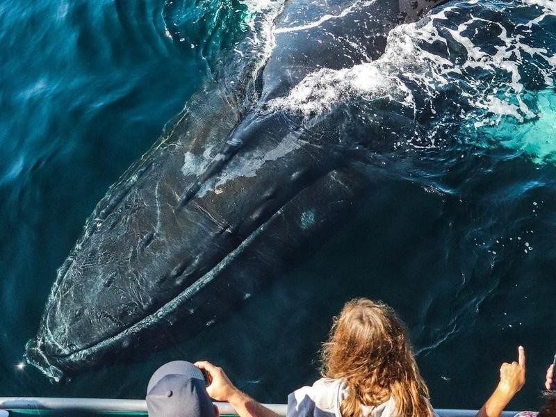 Group Sees Humpback Whale in Gloucester