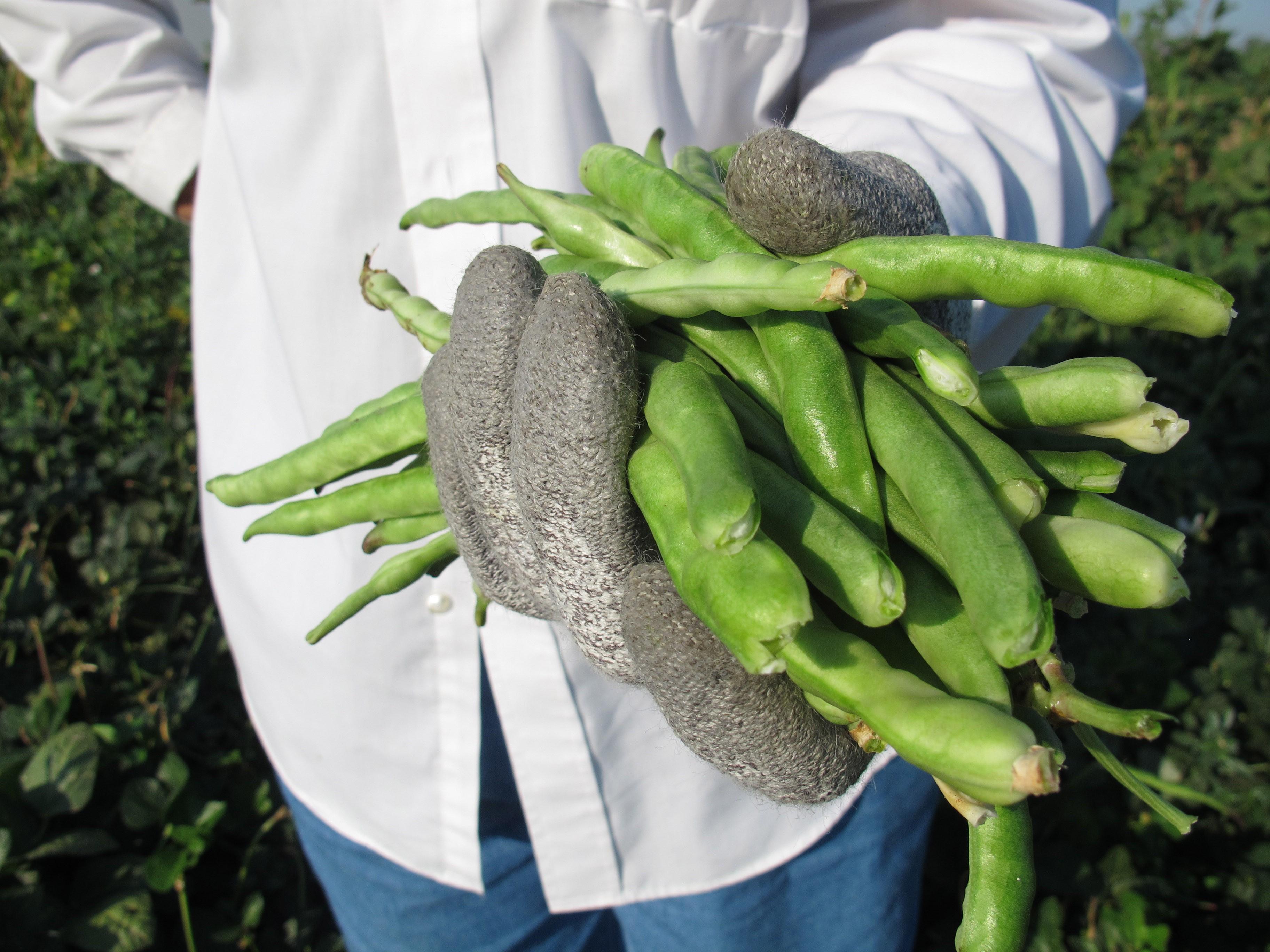 Black-eyed peas in California