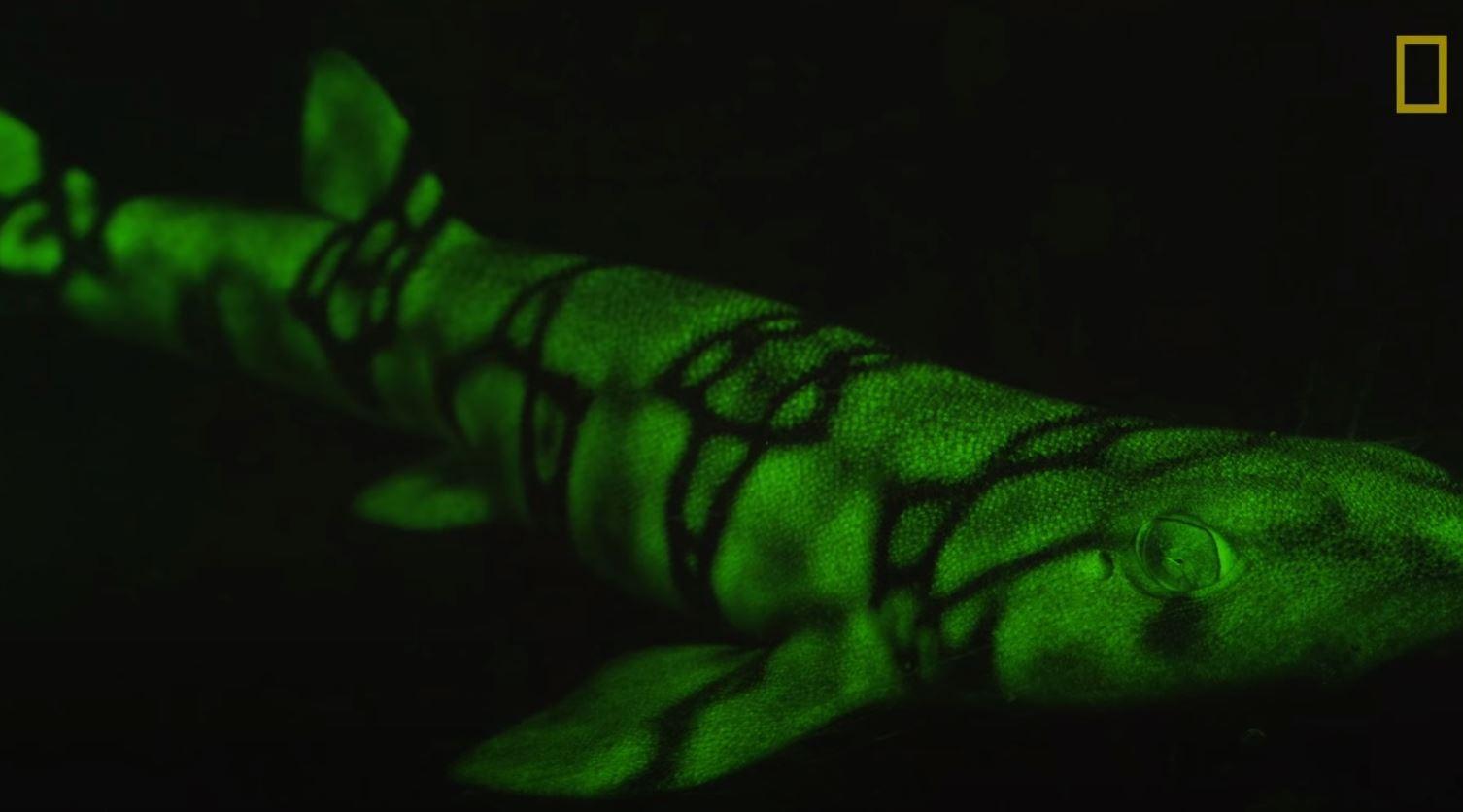 Glow-in-the-dark shark