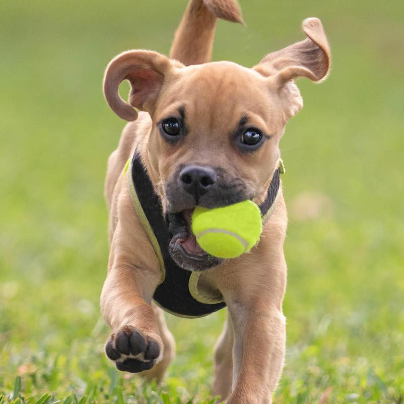 This pup already has a knack for fetch